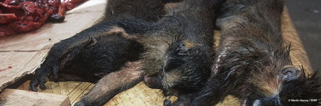 Bushmeat, een plaag voor de biodiversiteit