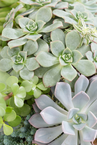 Pike Nurseries hosts class for Savvy Succulents, July 10-14