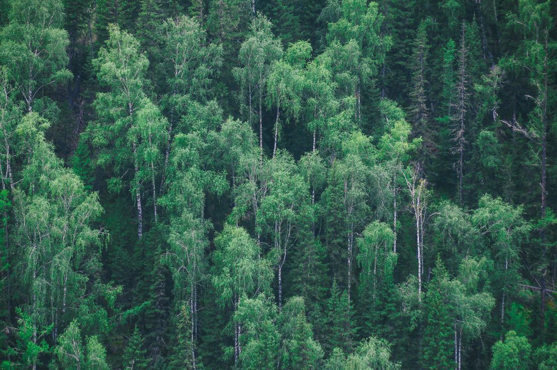App de relacionamentos planta 8 hectares de floresta em nome do amor