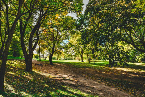 VUB researchers map out green space in Brussels