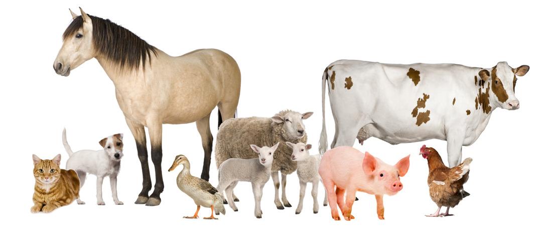 Adoption en seconde lecture du projet de Code wallon du bien-être animal
