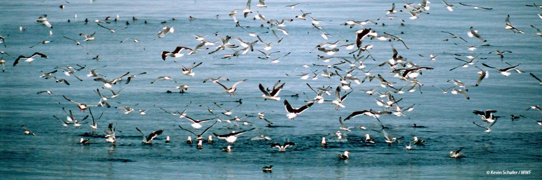 Staatssecretaris Philippe De Backer presenteert visie voor de Noordzee naar 2050 toe: een goede 1e stap, zeggen WWF en Natuurpunt