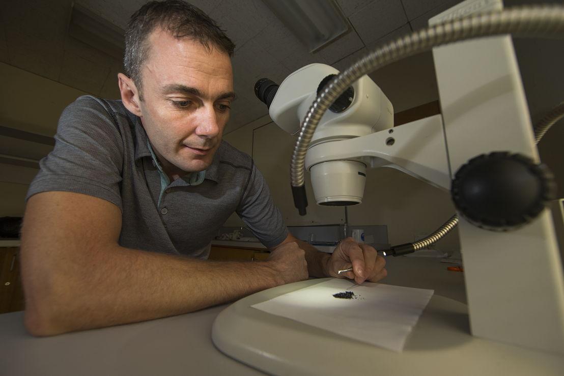 Dr Mark Kendrick analyses samples of volcanic glass. Image: Stuart Hay, ANU.