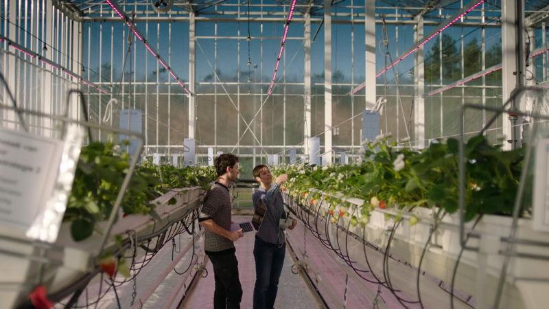 Led farming/ Koppen (c) VRT
