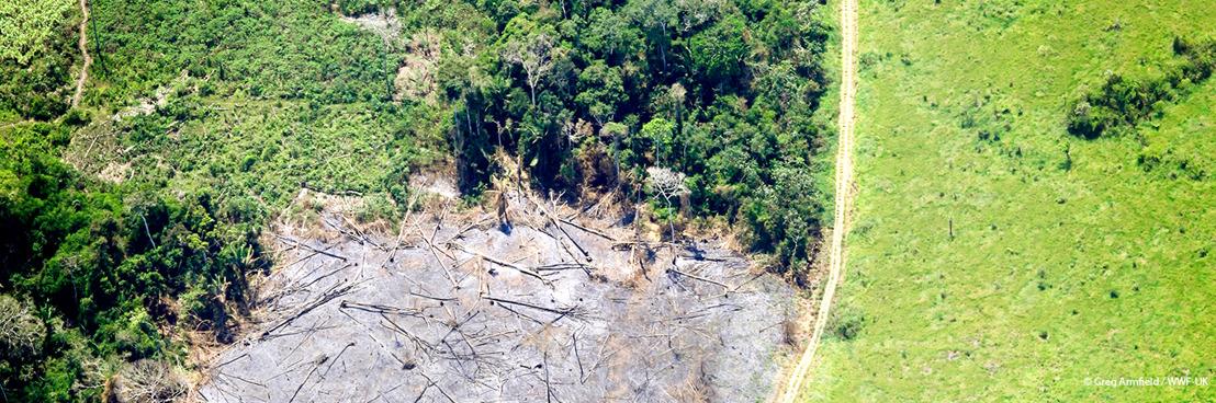 Toename van de Belgische bijdrage aan internationale ontbossing moet ons zorgen baren, waarschuwt WWF