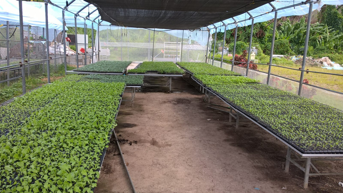 Dominica's Recovery: 130,000 new seedlings and counting...