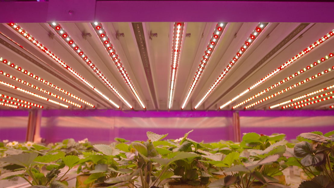 Led farming/ Koppen (c) VRT