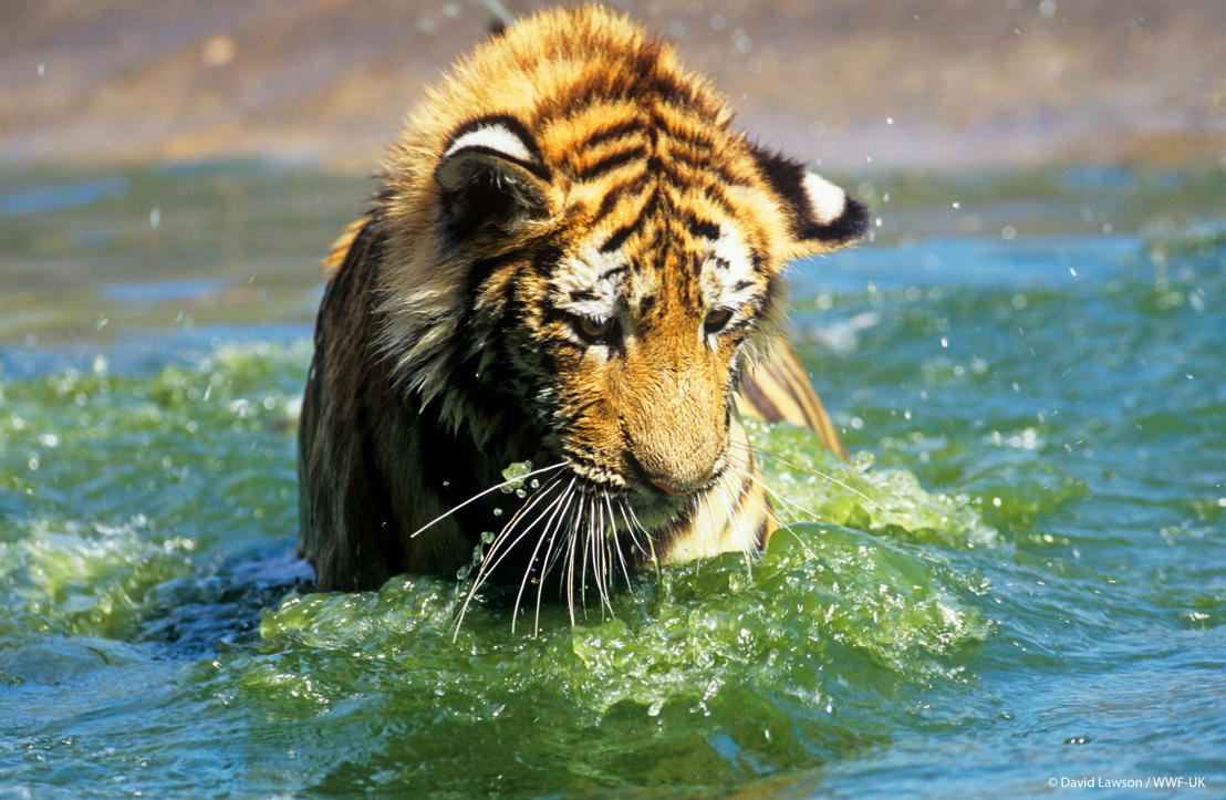 (c) David Lawson / WWF-UK