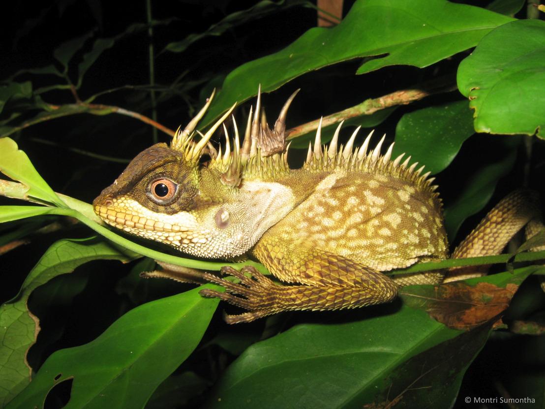 163 nouvelles espèces découvertes dans la région du Grand Mékong