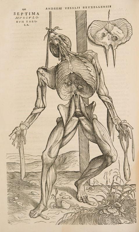 André Vésale, De Humani Corporis Fabrica Libri Septem, Bâle, 1543 © KU Leuven, Bibliothèque universitaire, inv. CaaC17 – Bruno Vandermeulen.