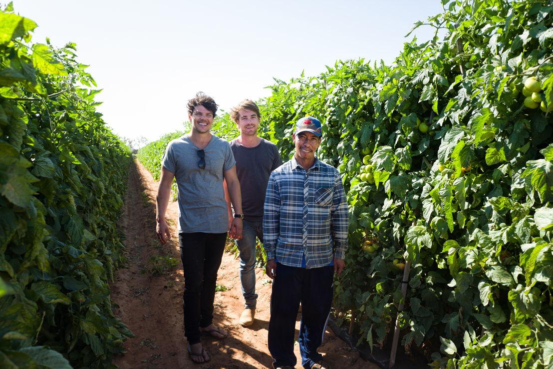 Hayden and Dan picking tomotoes