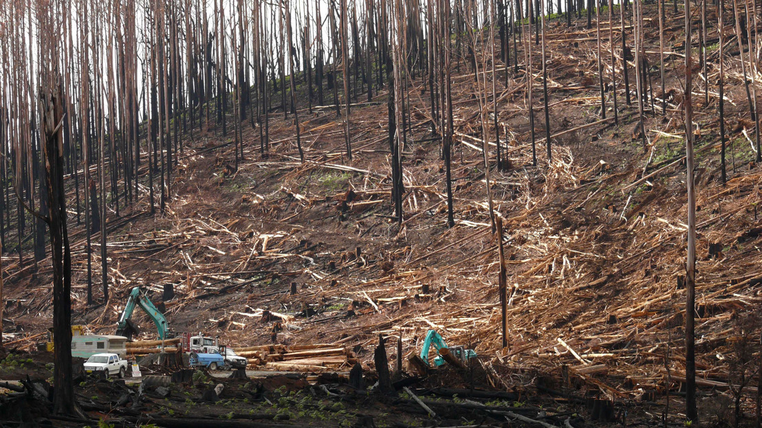 New benchmark to protect biodiversity after bushfires