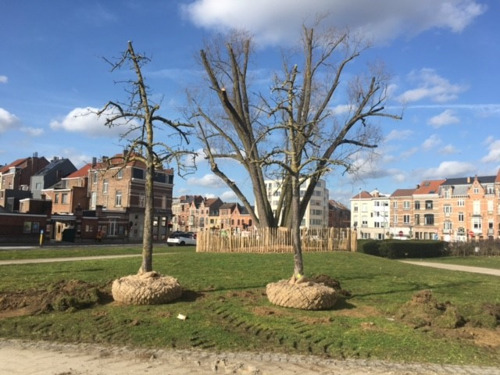 Stad Leuven verplant 32 bomen van Philipssite naar Jan Vrankxpad