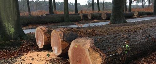 Natuur en Bos organiseert tweede Vlaams houtpark