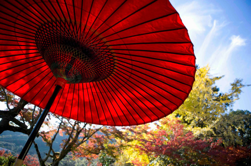 Non solo hanami, con Imbarco Immediato di Cathay Pacific si vola alla scoperta del foliage giapponese