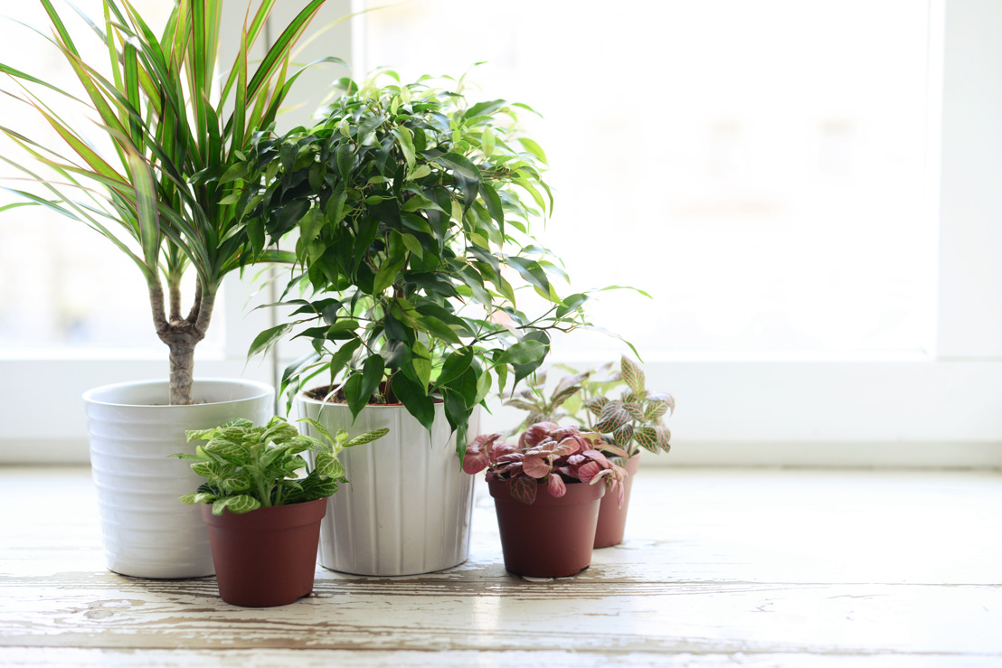 Create a healthy New Year with houseplants from Pike Nurseries