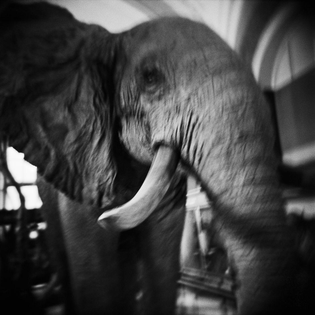 Elephant, 2015 © Olivier Leu
