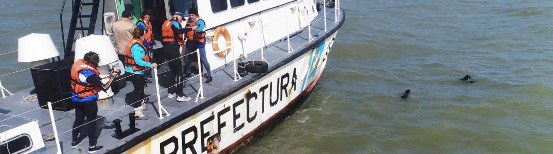 El proyecto que intenta descubrir por qué aparecen cada vez más lobos marinos desnutridos