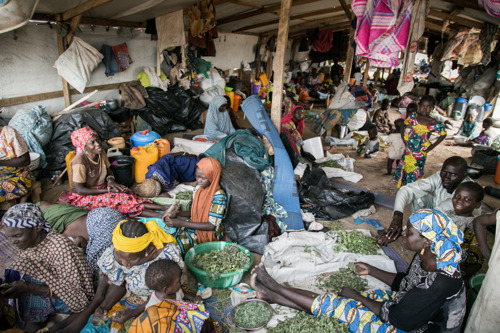 NIGERIA: MSF condemns the killing of five aid workers in northeast Nigeria