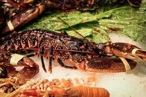 Nieuwe campagne voor een verbod op het levend koken van kreeften