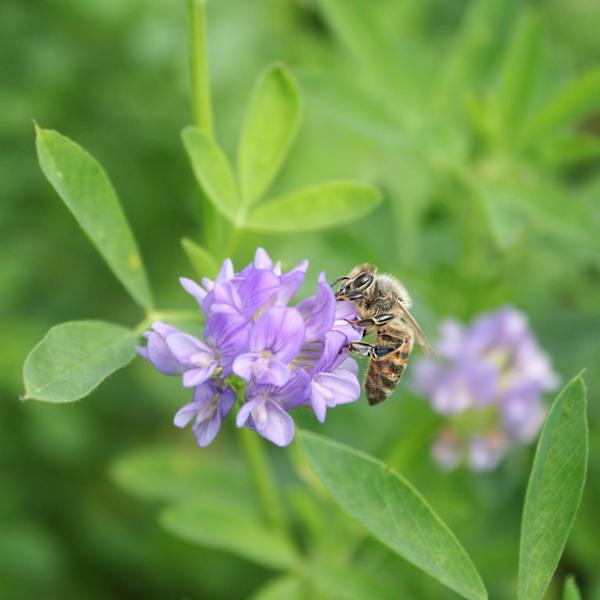 Preview: Boeren in de bres voor bijen