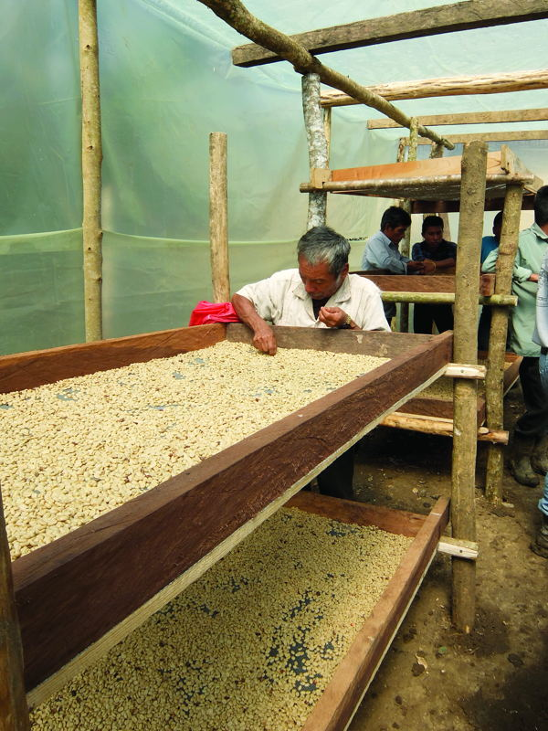 Solar dryers financed by this project ensure greater yield from the coffee harvest.