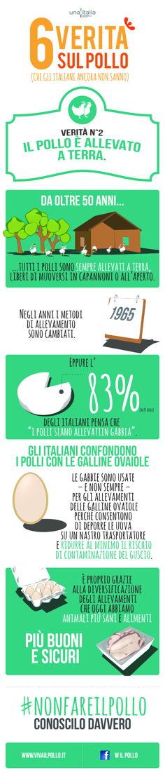 Infografica - Il pollo italiano è allevato a terra