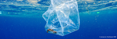 Op Internationale 'Plastic bag free day' start WWF een zomercampagne tegen plastic vervuiling.