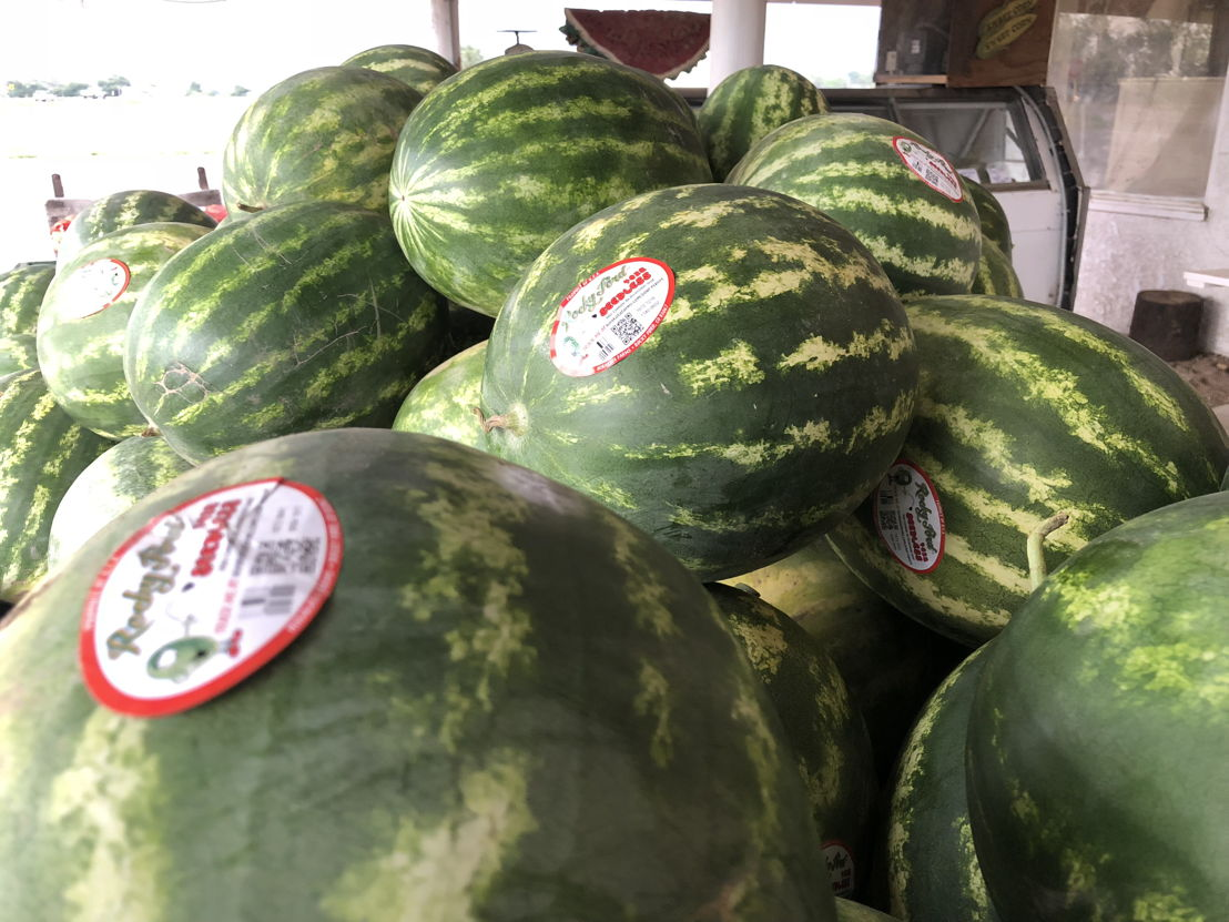 Rocky Ford Watermelon stacked for customers to a Rocky Ford farm stand.
