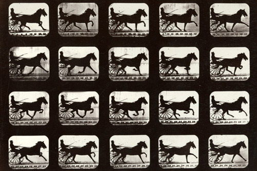 Motion Study - Eadweard Muybridge © Stanford University