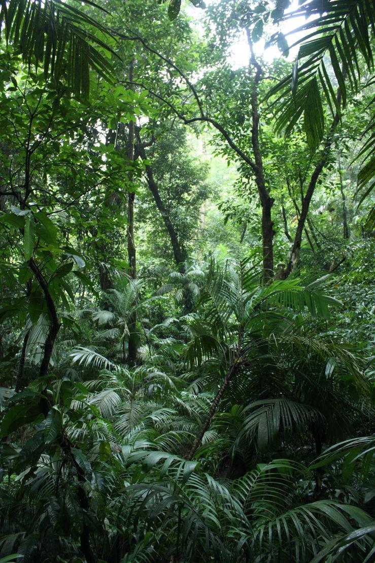 Selva alta perennifolia--Foto-Steven Dessein.JPG