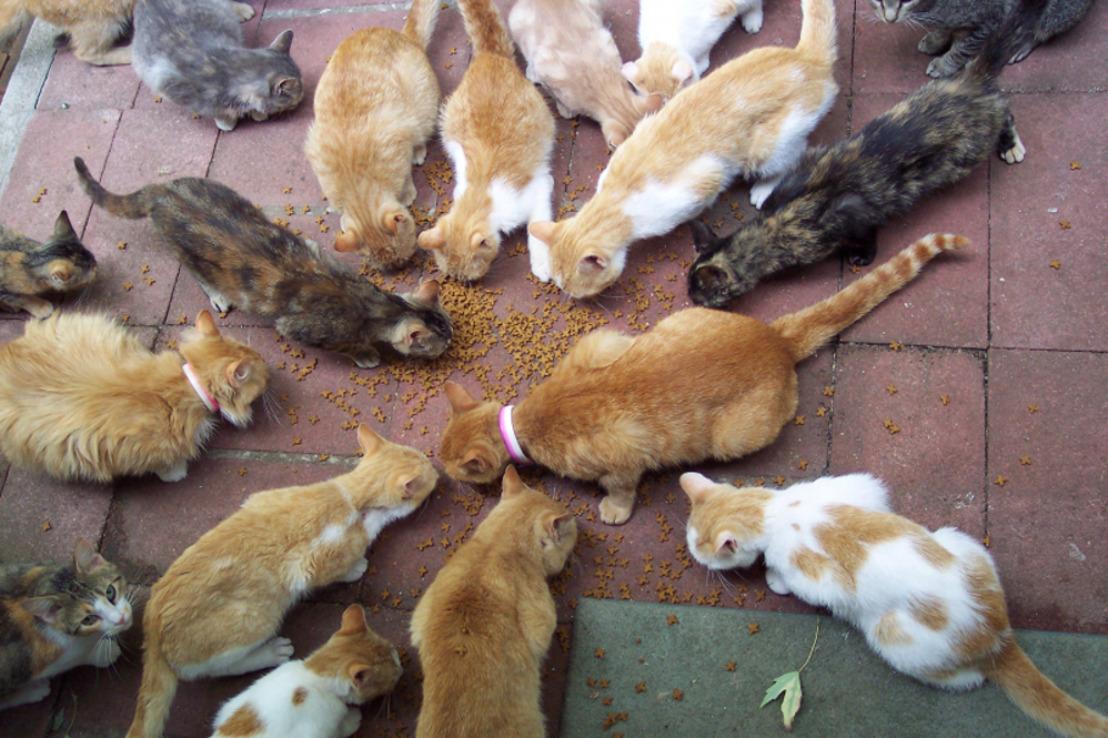 L'identification des chats bientôt obligatoire en Wallonie