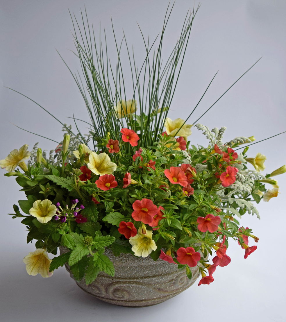 Mixed Arrangement Container Garden (photo by Pike Nurseries)