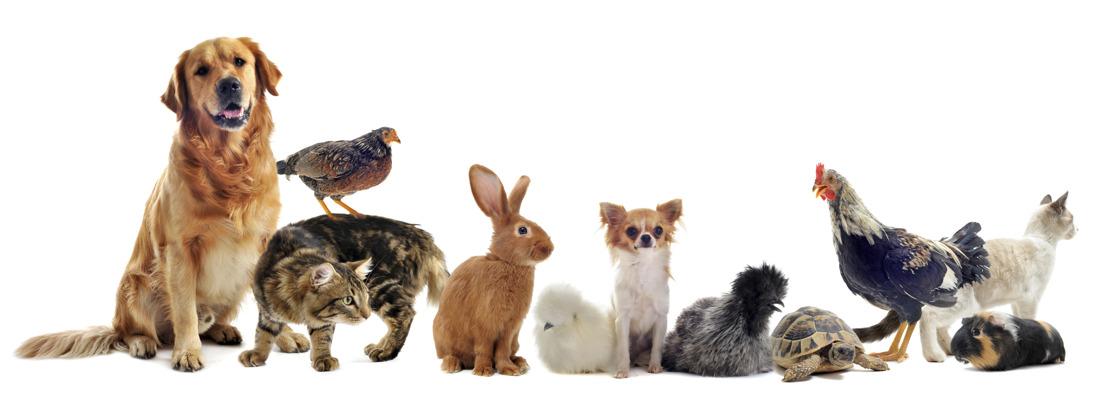 La Wallonie se dote d'un ambitieux Code du bien-être animal
