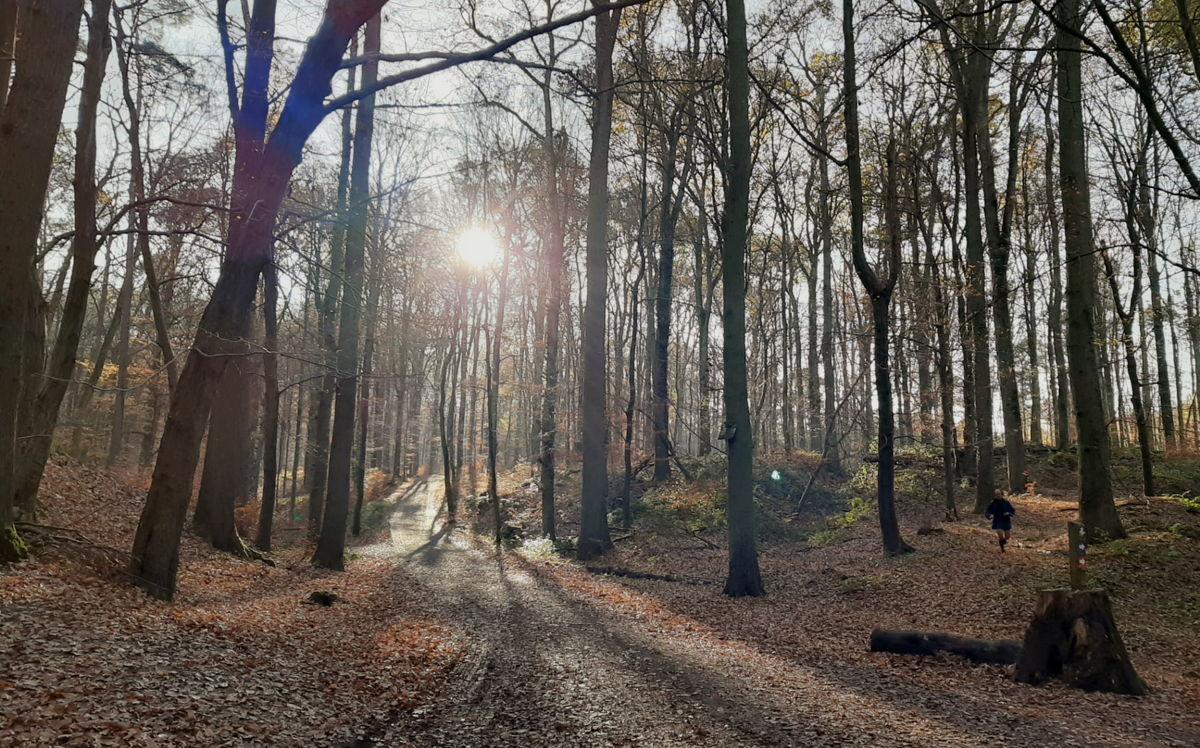 Meer bos voor Vlaanderen, ruimte om te herbronnen