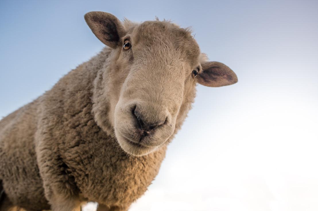 Dieren krijgen politieke upgrade met minister van Dierenwelzijn in Brussels Gewest