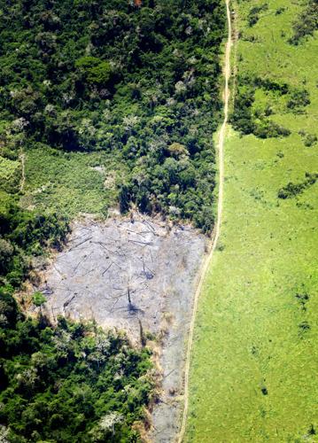 L'augmentation de l'empreinte belge en matière de déforestation doit nous préoccuper avertit le WWF