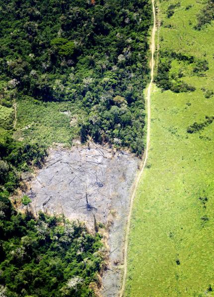 Preview: L'augmentation de l'empreinte belge en matière de déforestation doit nous préoccuper avertit le WWF