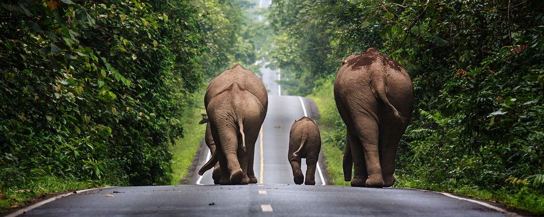 Thailand_Khaoyai National Park