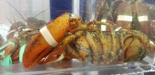 Nouvelle campagne : interdire l'ébouillantage des homards vivants