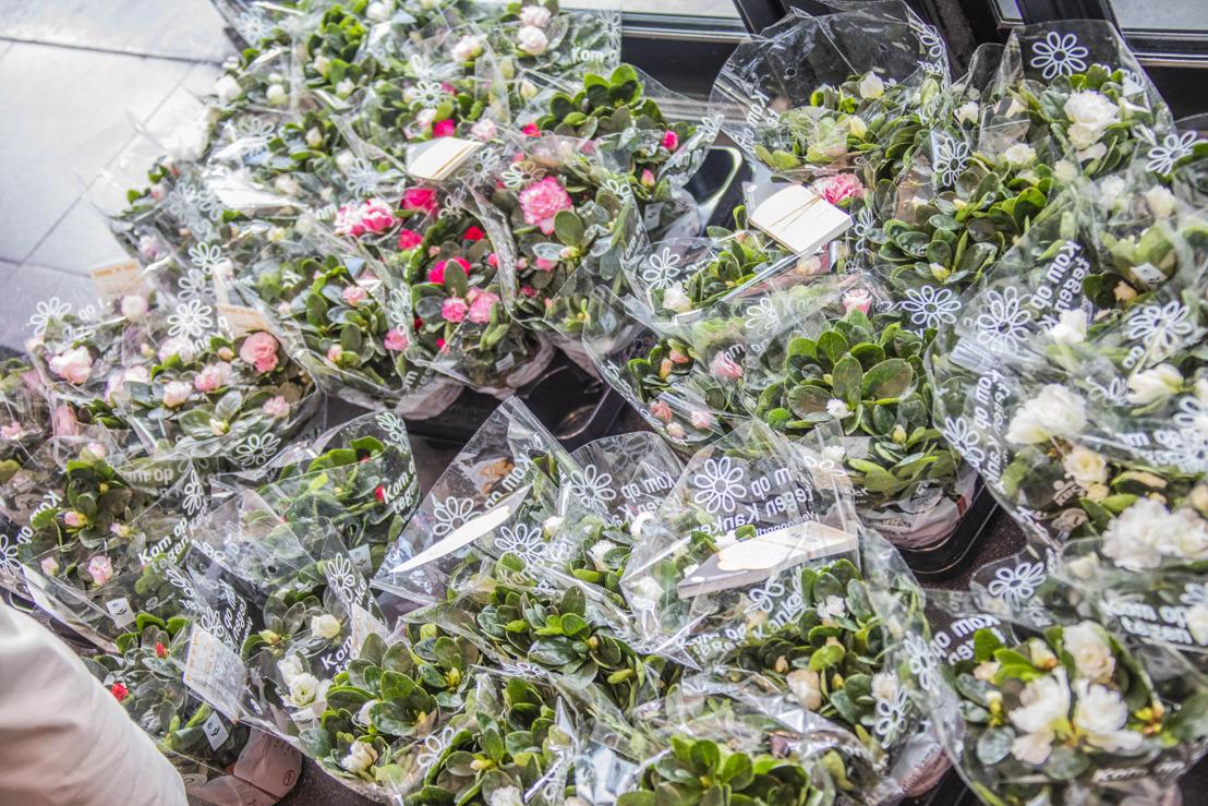 339.310 azalea's verkocht tijdens jubileumeditie Plantjesweekend voor Kom op tegen Kanker