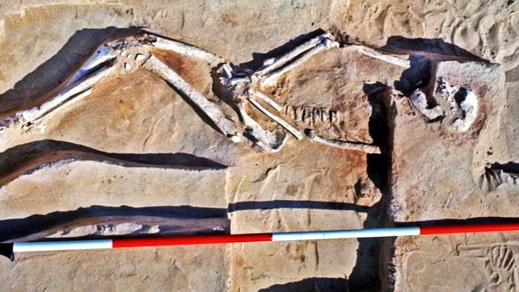 Mungo Man skeleton supplied Jim Bowler
