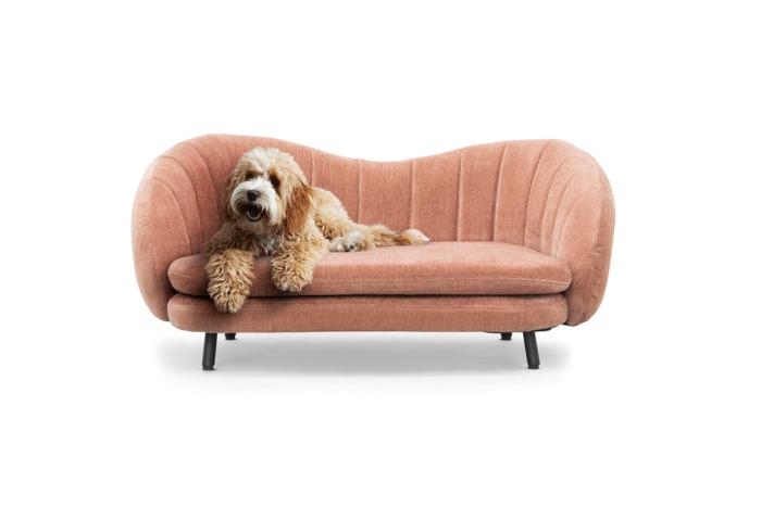 Sofacompany lanceert designsofa voor hipster honden