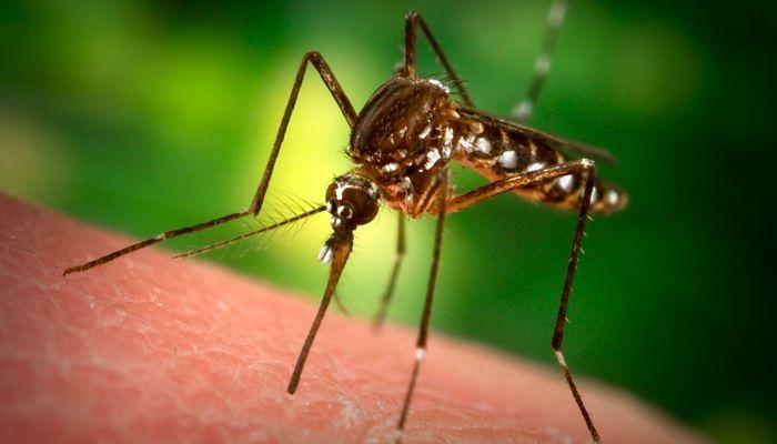 Prevent mosquitos