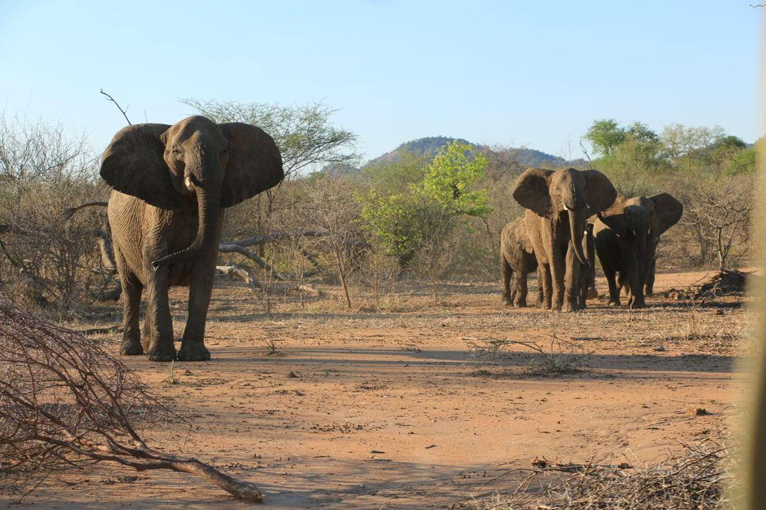 Elephants in Zimbabwe. Photo Winsome Denyer