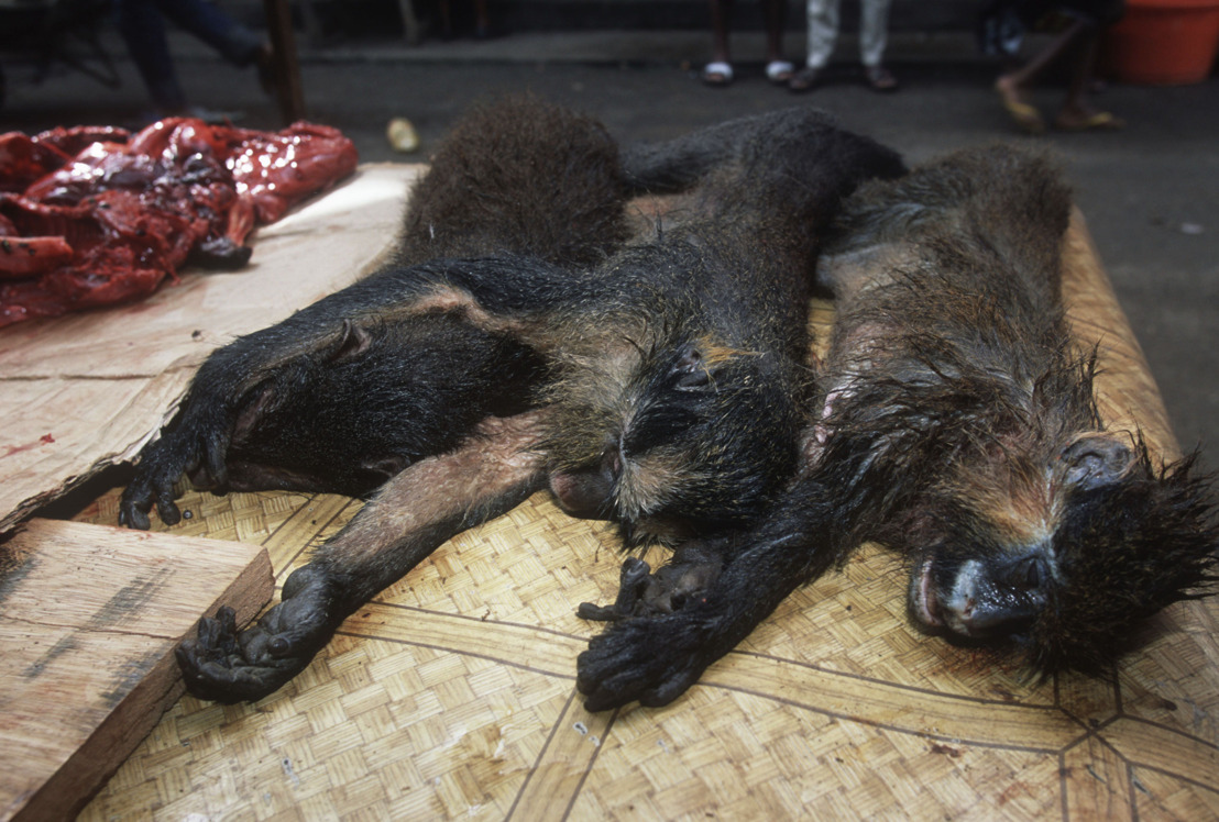 La viande de brousse : un fléau pour la biodiversité