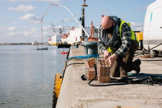 Duikers installeren deze week kooitjes op meerdere plekken in de haven.