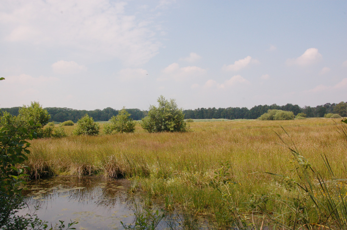 Vlaams natuuraanbod uitgebreid met 289 hectare in Mol-Postel