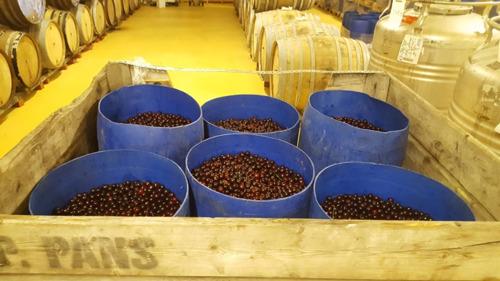Nieuwe kriekenoogst aangekomen in Brouwerij Belle-Vue