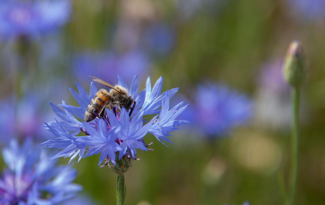 Boeren in de bres voor bijen